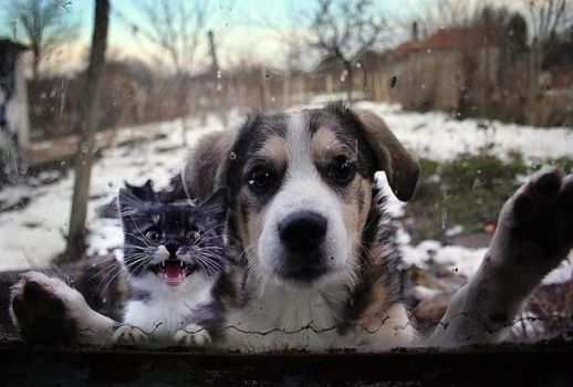 Let us in.