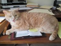 Turbo dictating a letter...