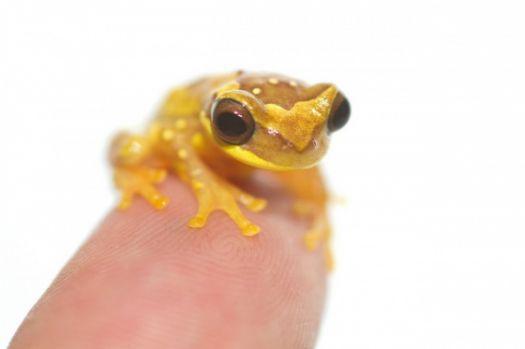 Fingertip pet