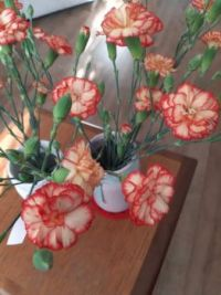 Small Carnations