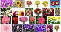 Flowers 2 puzzle