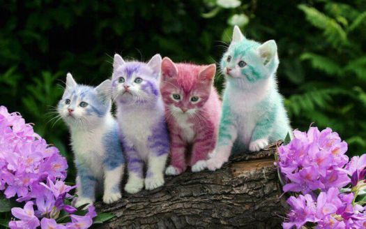 rainbow kitties (skittles  lol)