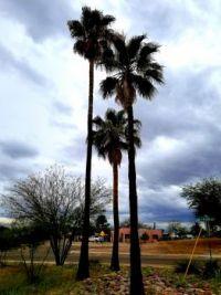Tucson neighborhood
