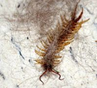 Dead centipede in my basement...