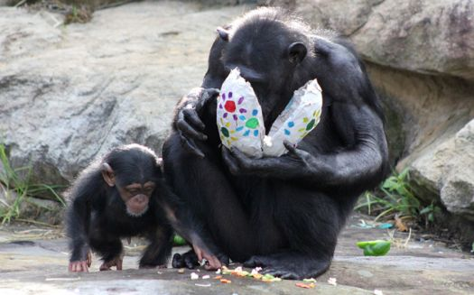 Easter at the zoo