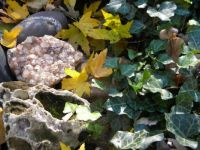 Rocks And Autumn Leaves  3
