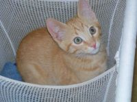 Young MAX in the hamper