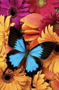 Pretty butterfly on pretty flowers..