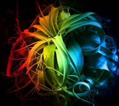 colors blume