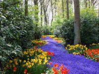 Purple Path