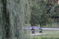 willow and bench