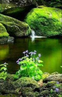 Lesní pramen_Forest spring