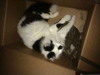 KC   The Box Sleeper