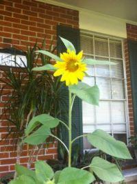 2013-07 Tony's Flower