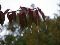 Winterlike decorations courtesy of Momma Nature!