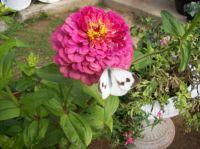 virág lepkével