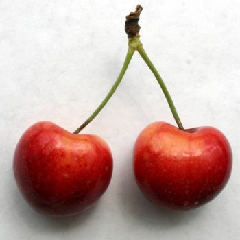 Cherry earrings ;-}