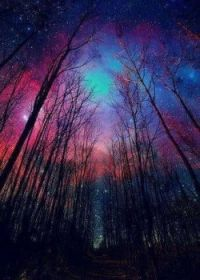 Forest Sky