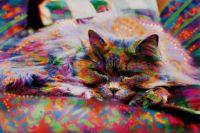 Colour Puss