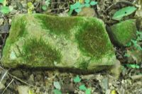 Interesting moss formation on a rock from Tennessee