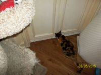 Coco Cherie - Now let me see if mommy has this door blocked or can I sneak in?