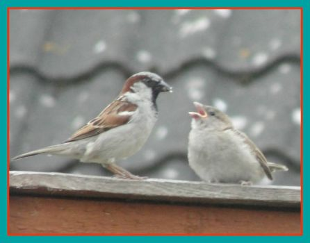 Theme-Birds-Sparrows