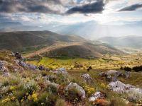 wildflowers-mountain-italy