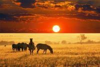 African Sunset / Zebras