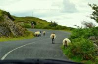 Traffic jam in County Mayo, Ireland