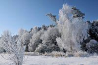 Winter in southern Bohemia