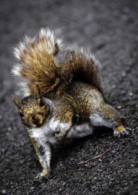 Nutty Linebacker