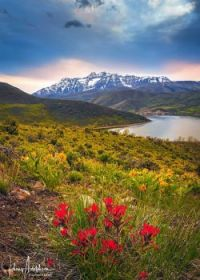 Spring flowers with snow covered peaks