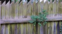 Starý plot s pamelníkem