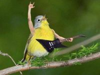 """3  ~  The Yell-ow Roc-King Bird....   ;-)  """"Get off my couch!!!"""""""