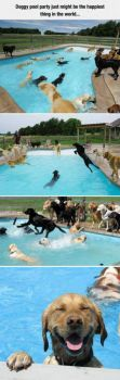 The_Doggy_Pool_Party