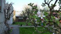 Jaro na zahradě / Spring in the garden