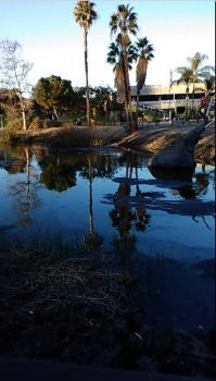 Lake Pit and Page Museum, La Brea Tar Pits