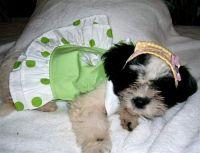 My baby girl Izzy