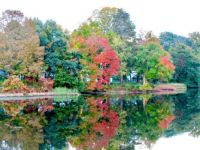 Fall Reflection, by Tom Walsh