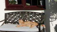 Ferdy - enjoying some autumn sunshine