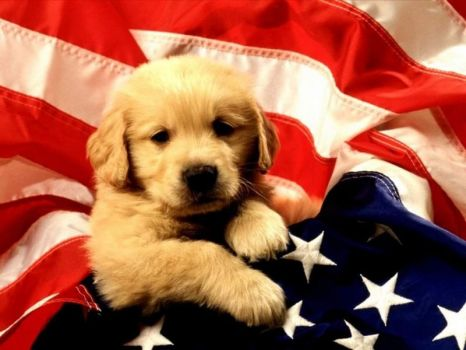 Puppy is Proud to be an American