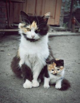 One of the most adorable kitty pics  ever!!!