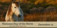 Today Is National Day of the Horse!!