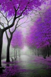 Theme ~ Beautiful trees - 3