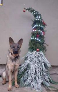 Čestná stráž :-)