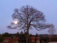 Moonrise over Oak Cemetery