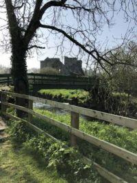 Peaceful Irish Meadow