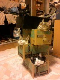 Cat Condos