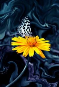 Touch of Color with Butterfly