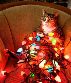 You don't need a tree when you have a cat